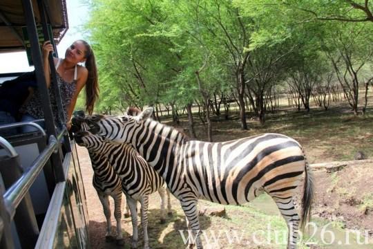 Зоопарк без клеток
