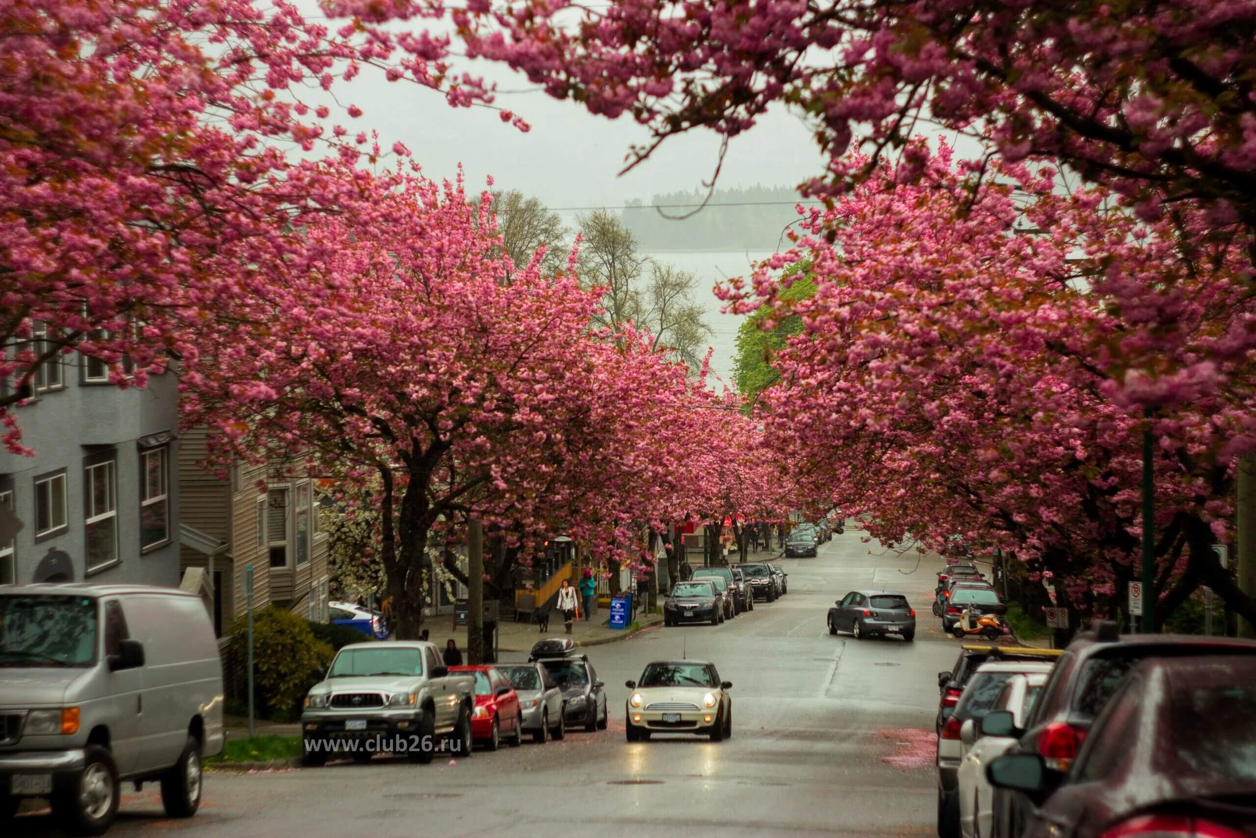 Канадская весна